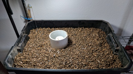Grow bed capped in pea gravel